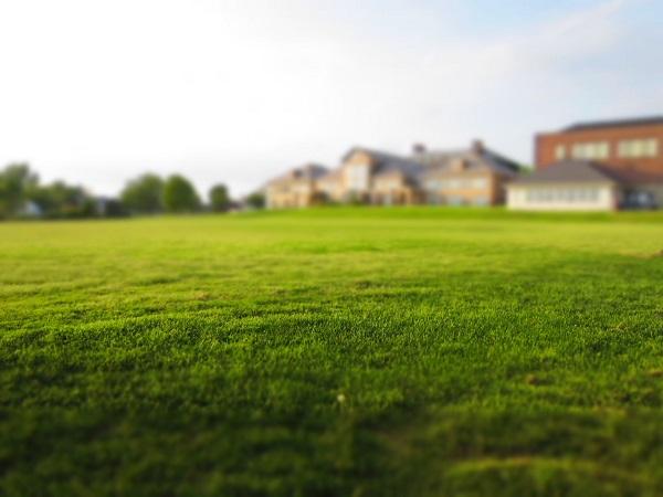 Seme za travo