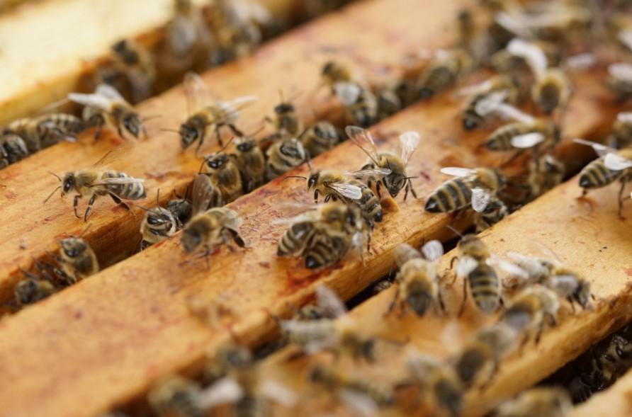 Čebelji panj