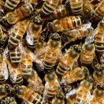 Izbira kvalitetnega in naravnega čebeljega panja